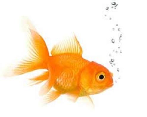 একুরিয়ামে মাছ