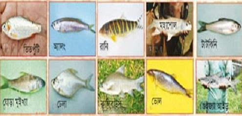 বিলুপ্ত দেশি মাছ