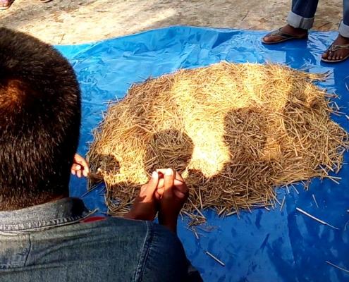 বর্ষাকালে গবাদিপশুর খাদ্য সংরক্ষণ পদ্ধতি