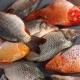 মাছ চাষ
