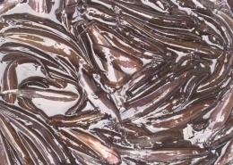 শিং মাছ